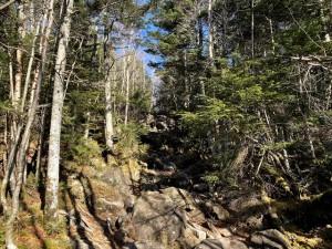 登山道の様子2